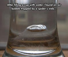 This is amazing! Re-pin: Bubble In A Spider's Web