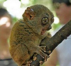 """madagasgar animals - Bing Images  """"baby lemur"""""""