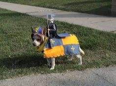 dog dressed up as a horse of a knight