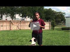 New video_ Dog Behavior & Training _ Dog Training Whistle Watvh now!.flv -