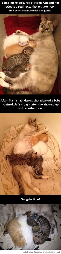 Mama Cat and her adopted squirrels...