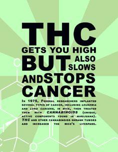 #Cannabis cures #cannabis #ifweedwerelegal #marijuana #weed #hemp #MMOT #legalizeit #legalize #MMJ #toohigh #0Deaths #stonerfamily calmed420.com