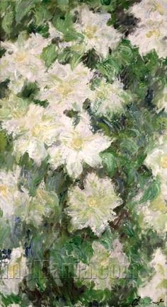White Clematis by Cl