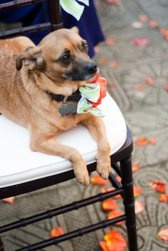 Put your dog in the ceremony!