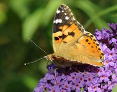 Embrace National Butterfly Day By Making Your Own Feeder | Sunrise Senior Living