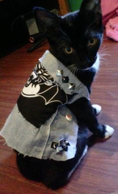 TxAxNxD   Look At These 19 Adorable Cats In Punk Vests
