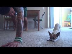 Yoga Time with a Cute Chihuahua - Intermezzo #2 - YouTube