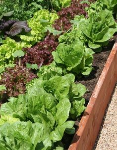 Vegetable Gardens for Beginners~Planting Vegetable Gardens at