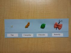 Lifecycle of the butterfly using pasta.  (orzo -egg; spiral- caterpillar; shells- chrysalis ; bowtie-butterfly )    Have fun!!!