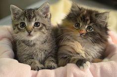 two cuties #kittens