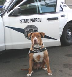 Police Dog.