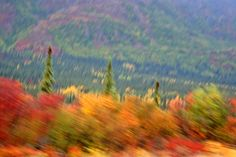 A blur of fall colors. Alaska.