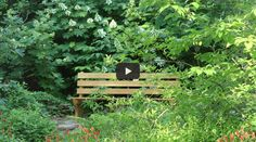 A beautiful video that explains the concepts in THE LIVING LANDSCAPE: DESIGNING FOR BEAUTY AND BIODIVERSITY IN THE HOME GARDEN.