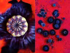 poppy red & blue-black {palette of the week}