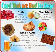 food that are bad for dogs...food guide