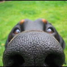 My what a big nose you have!