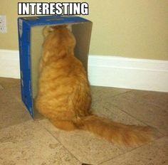 cats, anim, laugh, funny pictures, funni, boxes, humor, kitti, kitty
