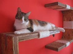 Cat Shelves -Think I want some of these in my seeing room when we get our house!