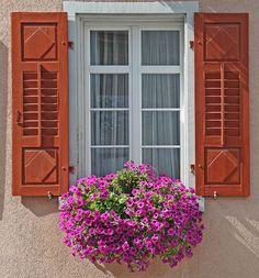 window box, shutter, pretti window, flower boxes