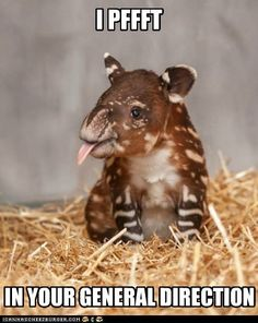 Ya gotta love a baby tapir with an attitude! ;p