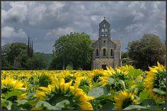 French church in sunflower fields