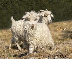 Cotton & Matilda by Jean, via Flickr