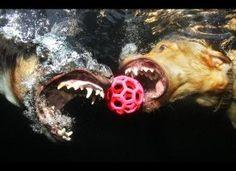 Underwater dogs. LOL!