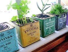 Latas de té como maceteros #DIY #recicle #can #plants