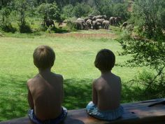 Sitting on by pool at the Mara Bush houses, the boys admire the herd of elephant approaching the water hole. family safaris - Asilia Africa
