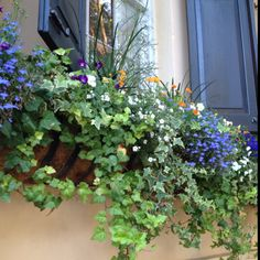 Window Box Charleston