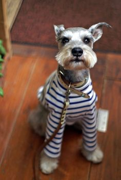 We can't get enough of this pooch in stripes.