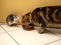 Sharing is caring :D