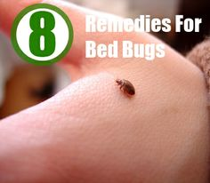 Best homemade remedy for bed bugs