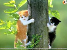 We can never have enough of cute cats. So here are two supercute kitties for you.