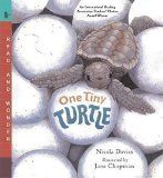 One Tiny Turtle by Nicola Davies | Picture This! Teaching with Picture Books