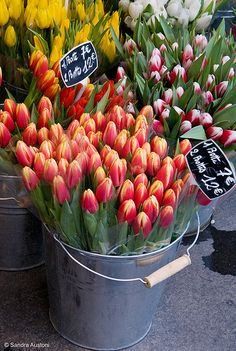 tulips...one of my favorite flowers. always make me think of @Brittany Wade-Worley