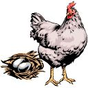 Info for chicken life cycle study