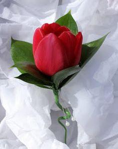 Tulip boutonniere