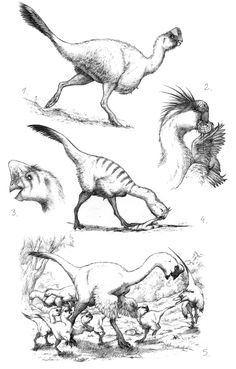 paleoillustration:  More information: dino sketches II, Miocene fauna sketches, sketch dump22122010, sketch dump30122012, oviraptorids.
