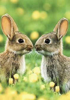 ~~Little rabbits...  ~ cute bunnies by Rohtola~~