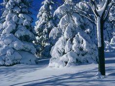 All Posters winter Christmas scene | Christmas Winter Scene