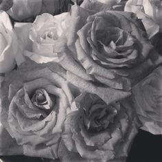 roses on pinterest climbing roses david austin roses. Black Bedroom Furniture Sets. Home Design Ideas