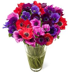 bouquet, birthday flower, gift, anemonies flowers, anemon flowerbudcom, perfect flower, garden, anemones, anemon deliv