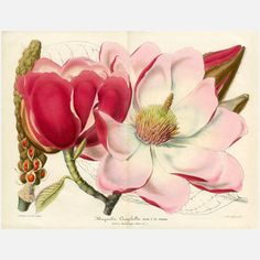 """Excellent print collection on Fab.com """"Beautiful Botanicals"""""""