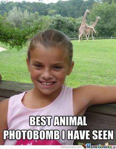 Animal Photobomb