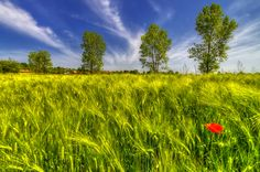 Photograph Poppy by Boris Frkovic on 500px