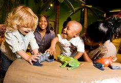 Make noise! Make memories! Explore the sounds and sights of the jungle in Rainforest Rhythm! Experience the rainforest by beating conga drums, turning rain stick logs, listening to tropical rapids, and interacting with jungle animals.