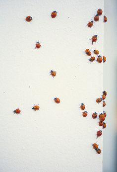 lady bugs!