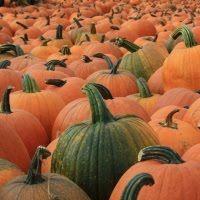 40 pumpkin ideas...