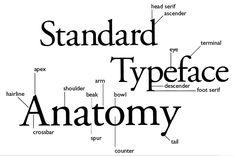 Anatomy for designers.